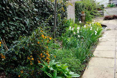border with narcissi