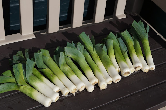 leeks, last harvest - growourown.blogspot.com ~ an allotment blog