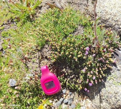miniature plants of tundra