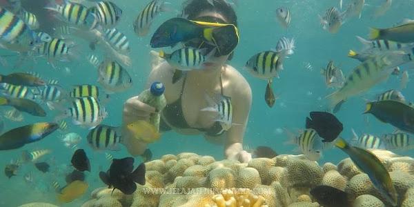 fasilitas wisata trip satu hari pulau harapan