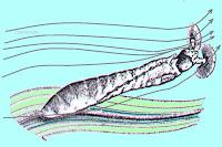 larva - Pragas e Eventos