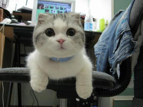 gato ojos redondos