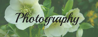 Photography Posts