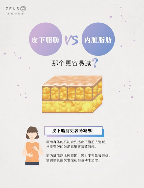 皮下脂肪和内脏脂肪哪个更容易减? Zenso Diet