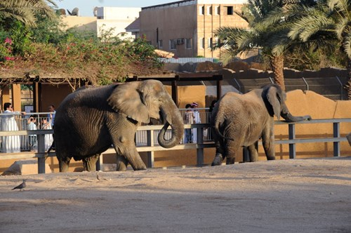 مواعيد حديقة الحيوان بالرياض أسعار تذاكر حديقة الحيوان بالرياض