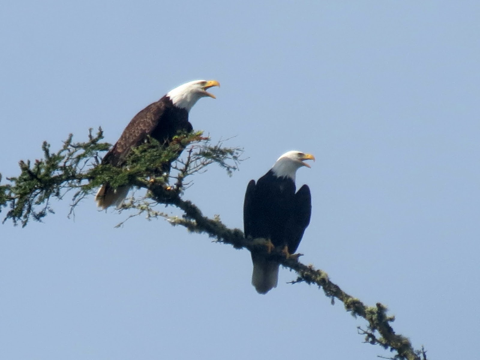 Viewing nature with Eileen: Deception Pass State Park
