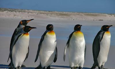 Burung pinguin habitatnya di wilayah kutub - berbagaireviews.com
