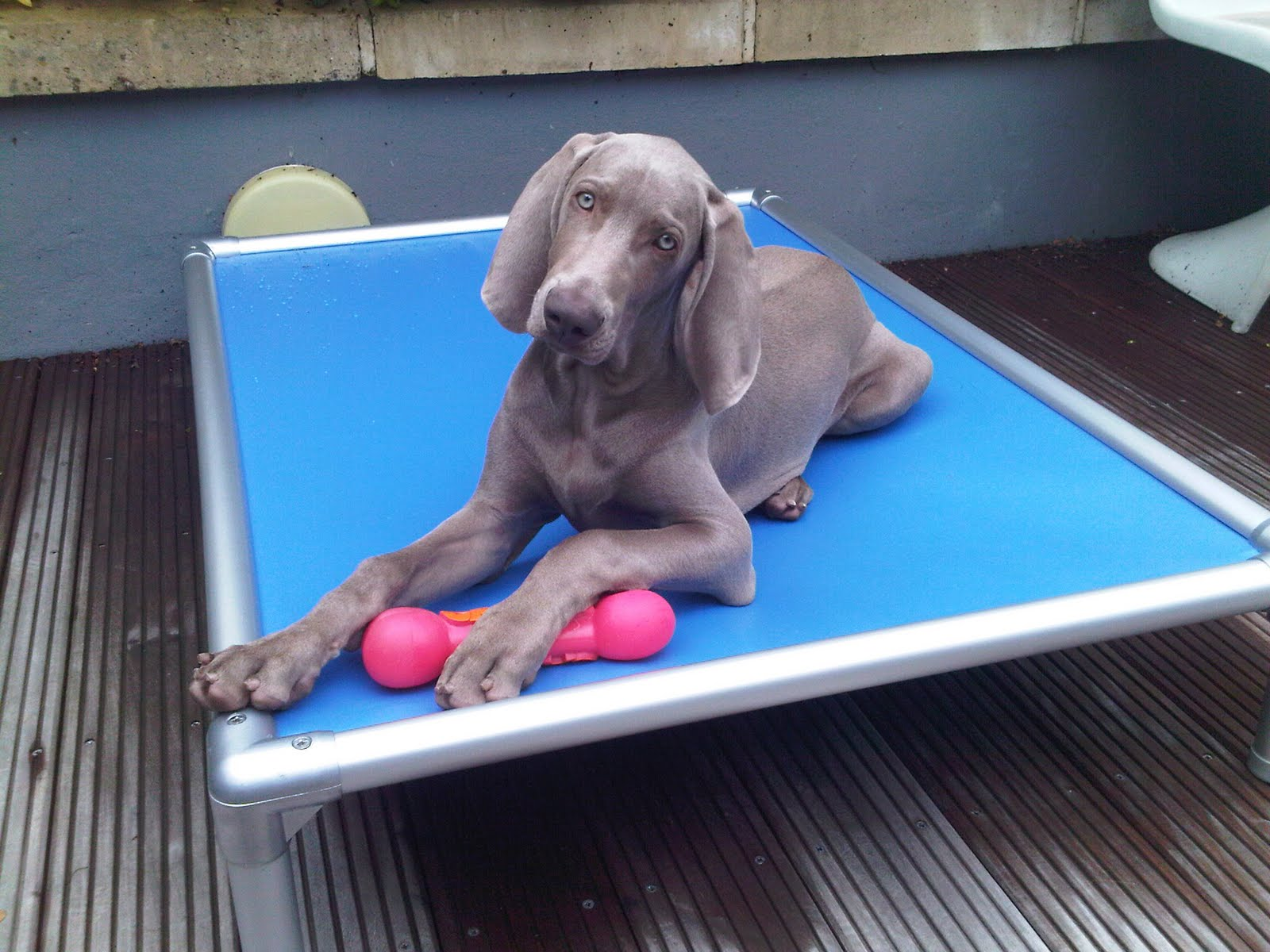 KURANDA DOG BEDS: I love my Kuranda Dog Bed!