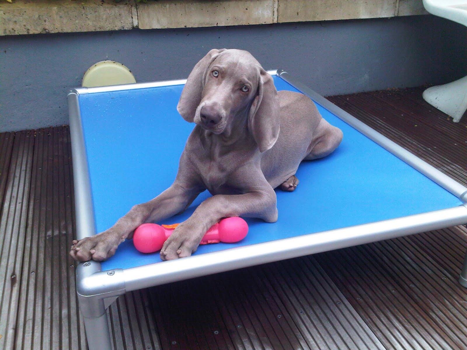 KURANDA DOG BEDS: I love my Kuranda Dog Bed!