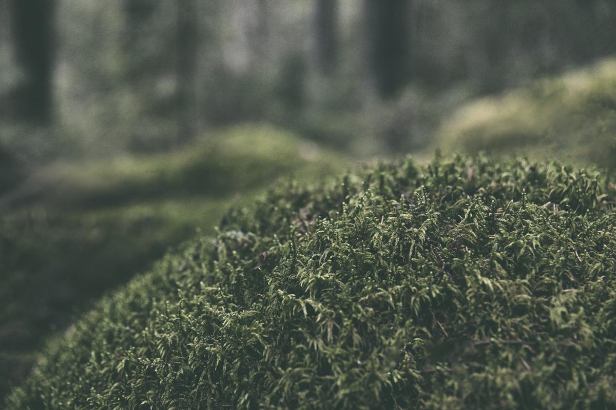 Hyvinkää, Terveysmetsä, luonto, luontopolku, nature, woods, metsä, metsäreitti, naturephotography, polku, valokuvaus, valokuvaaminen, Frida Steiner, Visualaddict, visualaddictfrida, luontovalokuvaus, this is Finland, Suomi, visit finland, sammal, sammalmätäs, moss