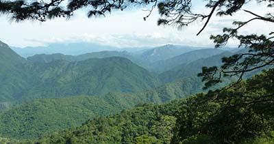 La selva guatemalteca esconde muchos secretos