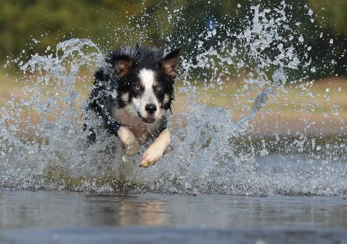 How to bathe your dog with dog shampoo