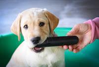 Labrador retriever chew toys