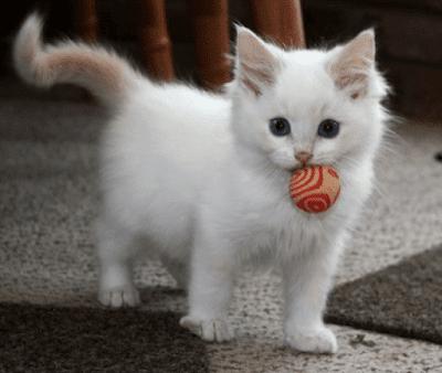 Ingin Bermain dengan Kucing? Coba Permainan Ini