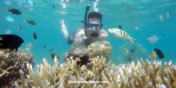 selam permukaan private wisata pulau harapan