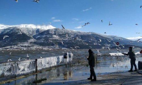 Η κακοκαιρία των προηγούμενων ημερών και ο παγετός που ακολούθησε τις εκτεταμένες χιονοπτώσεις στην Ήπειρο δυσκόλεψε τις συνθήκες αναζήτησης τροφής για την πανίδα της περιοχής.
