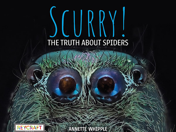 Scurry! The Truth About Spiders Cover Reveal