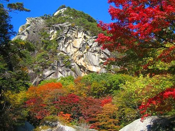 http://www.funmag.org/pictures-mag/flowers/fantastic-autumn-in-japan/