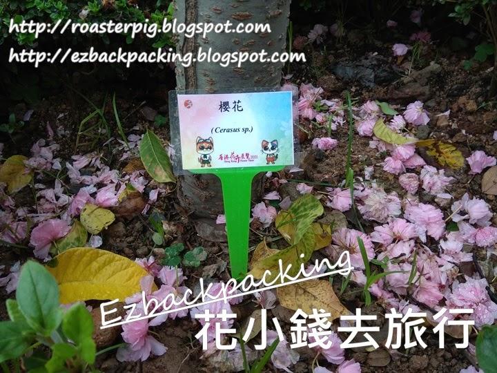 南區櫻花: 2021年香港花卉