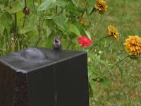 Small hummingbird sits on the top of a basalt column fountain.