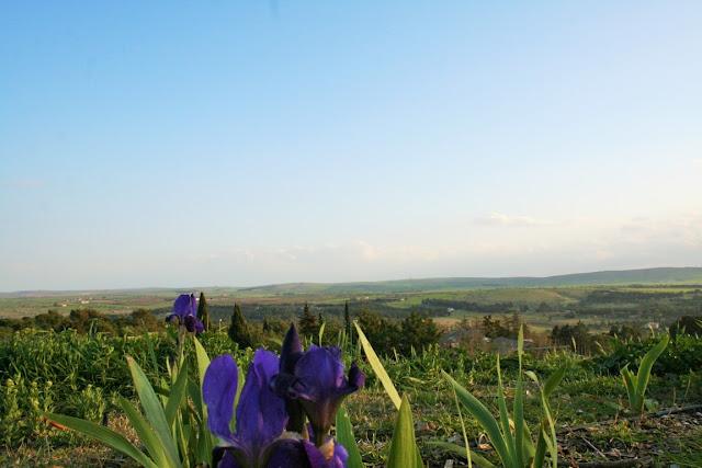 fiore viola, prato, collina, cielo,