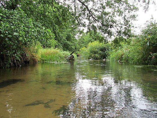 Rzeka Wieprz.