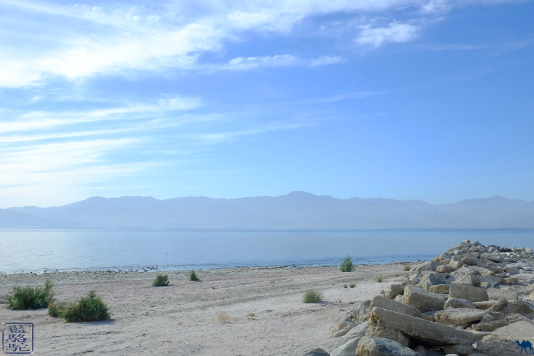Le Chameau Bleu - Salton Sea dans le sud de la Californie Amérique