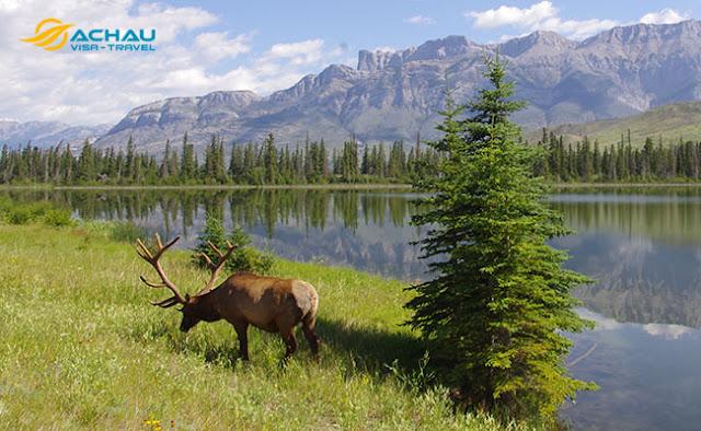 Bạn đã biết đến vẻ đẹp của vườn quốc gia Jasper 2