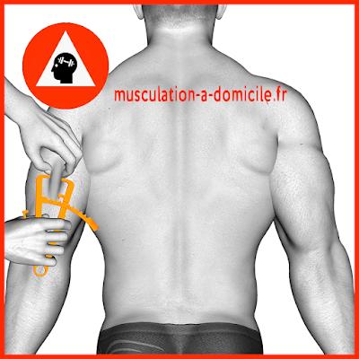 mesure triceps homme pince à plis cutanés adipomètre musculation fitness