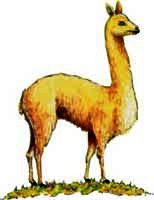 La vicuña del Escudo del Perú
