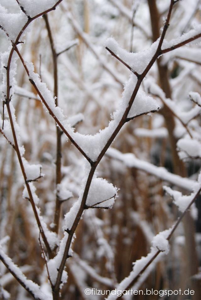 Schnee auf den Zweigen