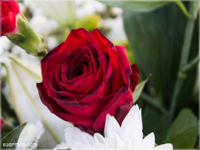 ورد احمر طبيعي 14 | Natural red roses 14