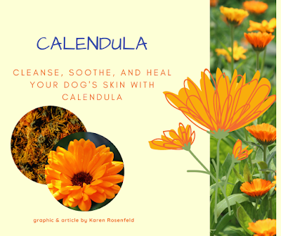Your dog's skin can benefit from this soothing healing herb, calendula