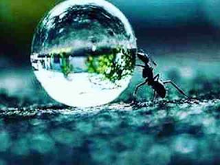 सपने में चींटी देखना sapne me chinti dekhna