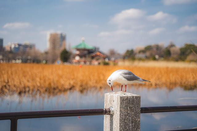 鳥,上野,ボケ,絞り