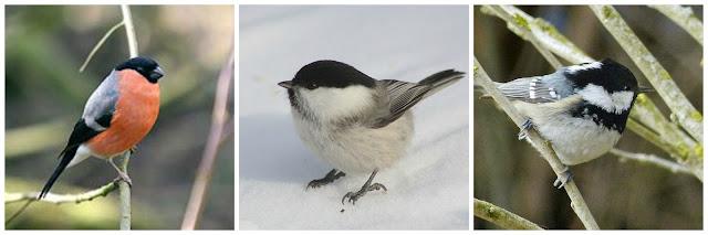 vinterfåglar vid fågelbordet