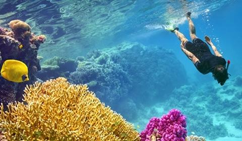 pareri-excursie-snorkeling-egipt