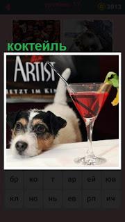 651 слов собака положила морду на стол рядом с коктейлем 17 уровень