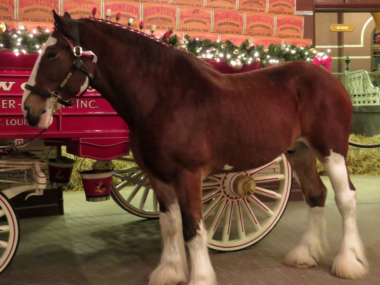 laurie loves horsesand who doesnt love the magnificent anheuser busch clydesdales one of the highlights of our little tour and a break from the