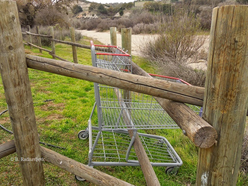 Odd Places to Find Shopping Carts