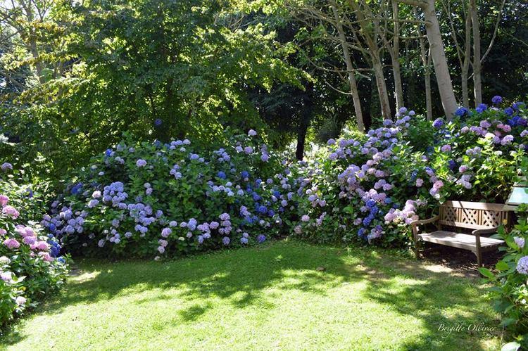jardin shamrock y la colecci n de hortensias m s importante del mundo. Black Bedroom Furniture Sets. Home Design Ideas