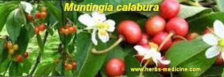Diabetes use Muntingia calabura