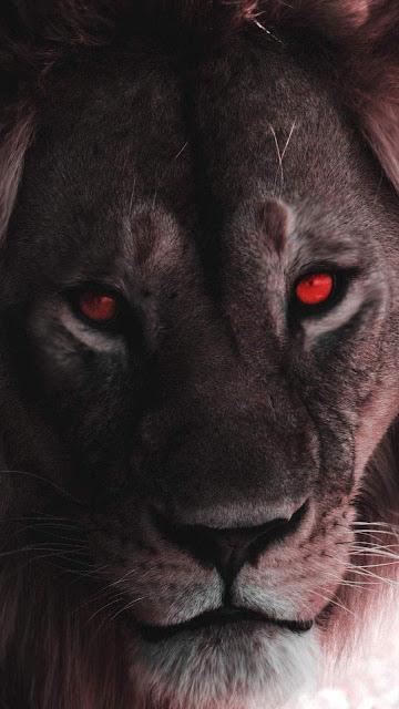 sfondo leone per smartphone