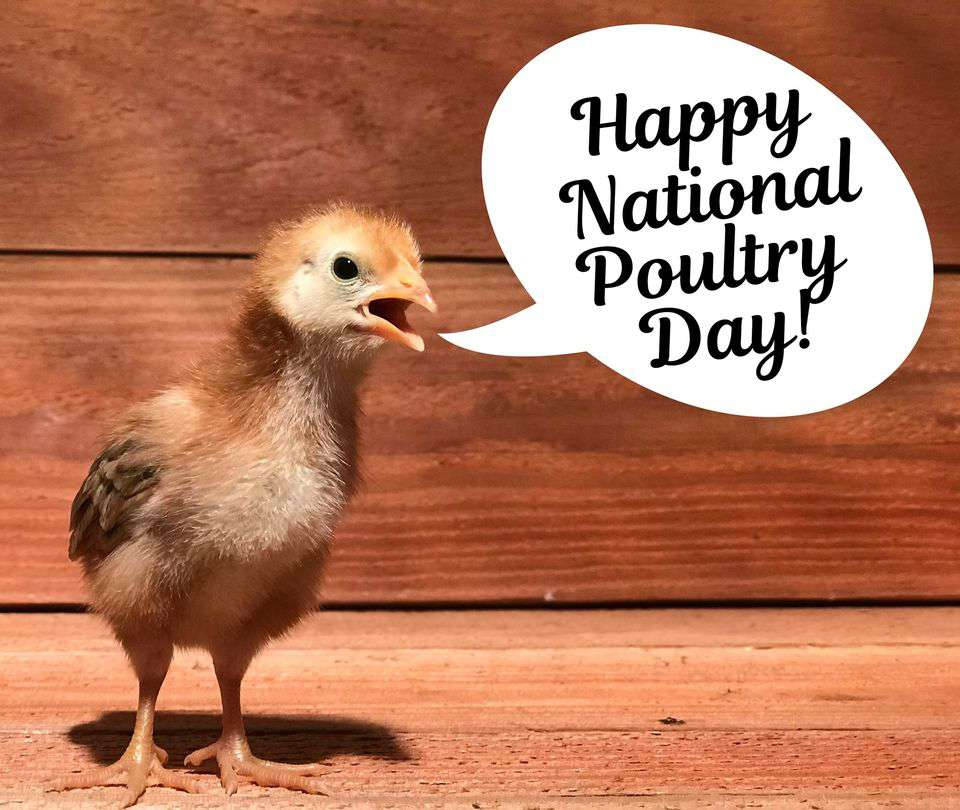 National Poultry Day Wishes for Instagram