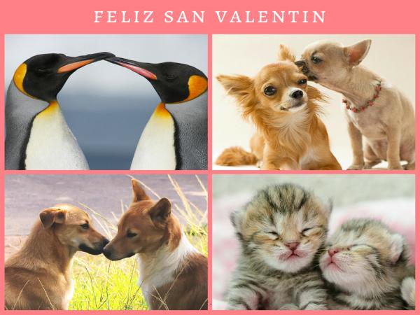San Valentïn animal