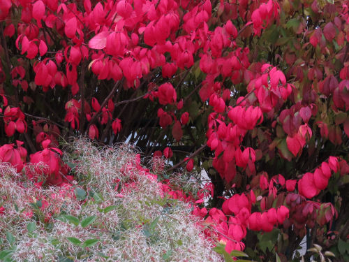 Meijer Garden fall colors