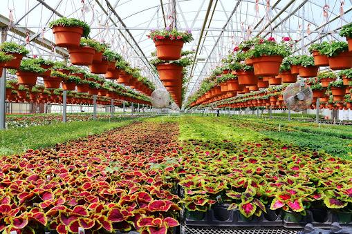 В агрофирме «Подмосковное» приступили к выращиванию цветочной рассады