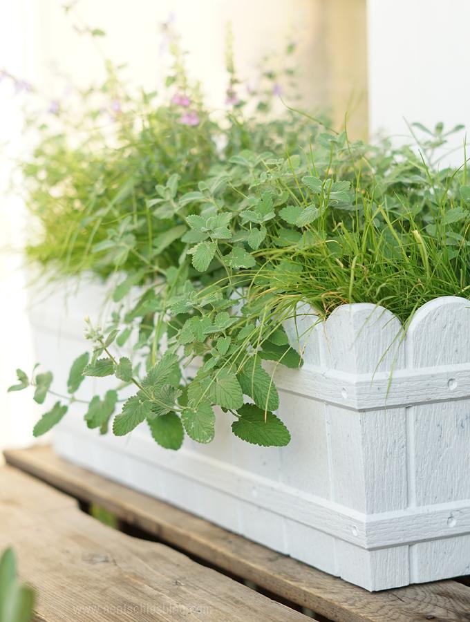 aentschies blog unser katzenbalkon die pflanzen. Black Bedroom Furniture Sets. Home Design Ideas