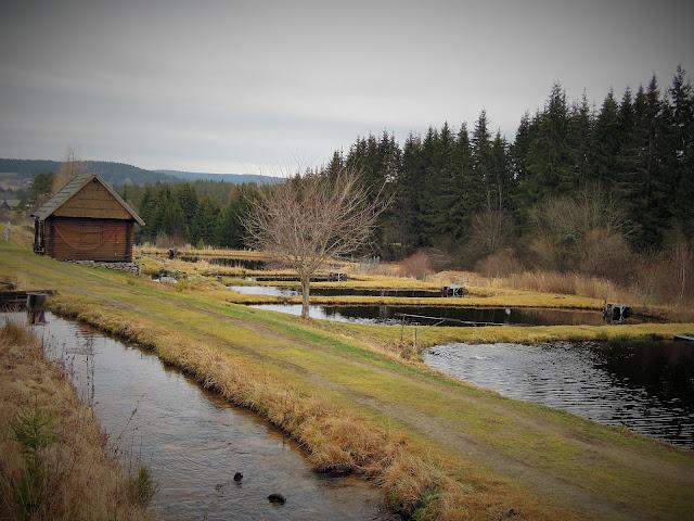 Můj fialový svět blog Borová Lada Odchovné rybníčky