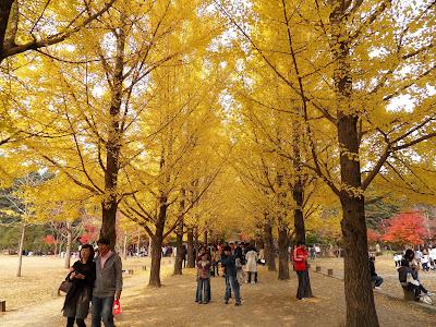 Nami Island - Tour Seoul
